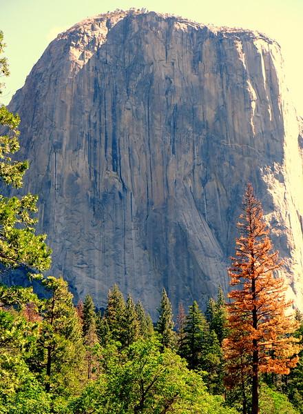 California Day 7 Yosemite 06-01-2017 120.JPG