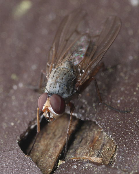 Insect macrophotography is fun!