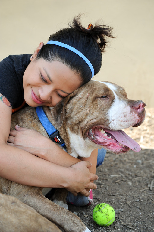 ". Adoption specialist Maria Salgado hugs ""Turtle,\"" a five-year-old pitbull-terrier mix, available for adoption at Best Friends Pet Adoption in Mission Hills, Wednesday, July 3, 2013. (Michael Owen Baker/L.A. Daily News)"