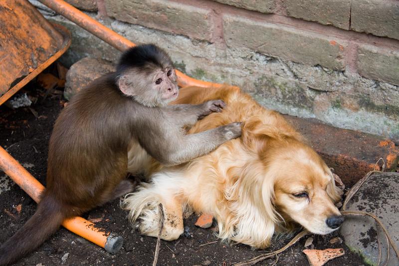 monkey-grooming-dog_4890774794_o.jpg