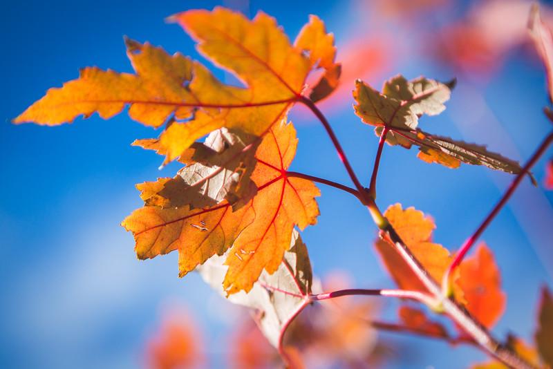 20151024-Fall Colors-143.jpg