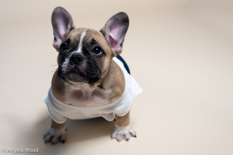 Puppies8.jpg