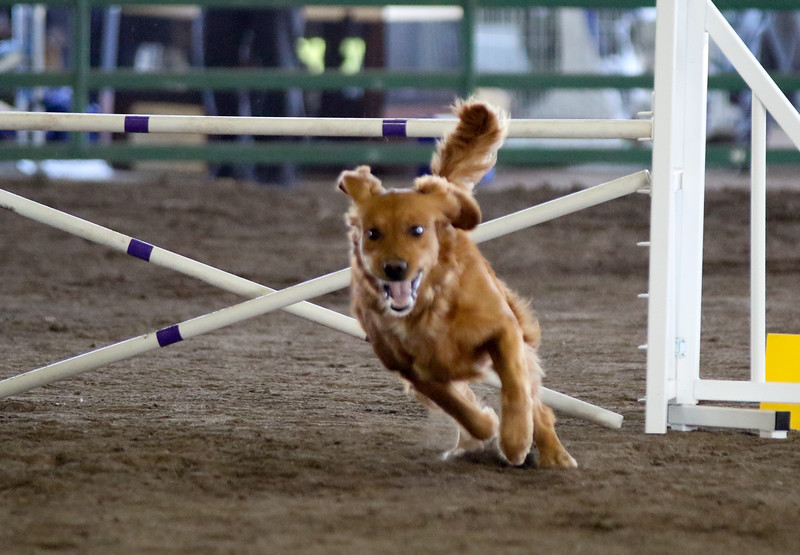 3-15-2015 Bloodhound-0613.jpg