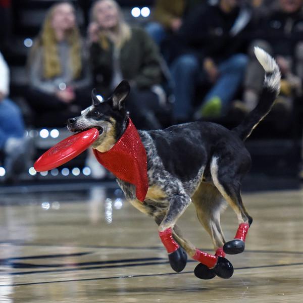 Frisbee dogs 2016-13.jpg