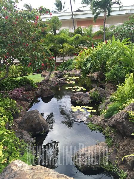HawaiiPhonePics-425.JPG