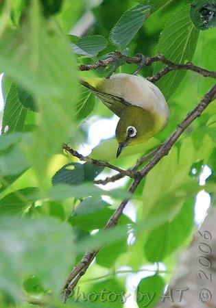 Birding 2006 June