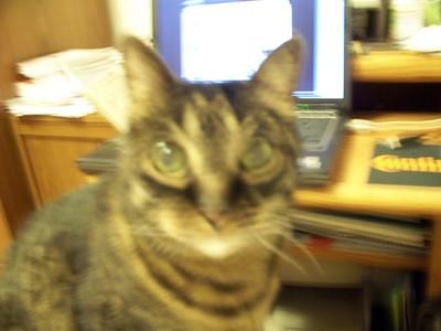 Sputnik Spooky Cat 2008