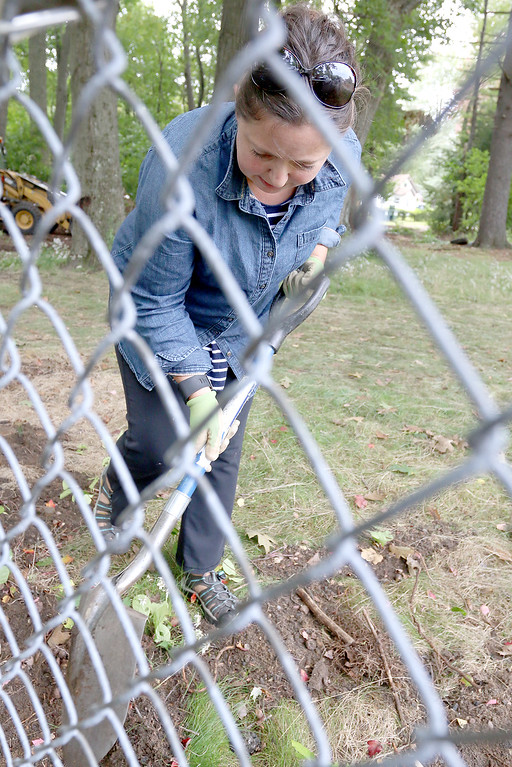 . The cleanup of  Wallis Park in Lunenburg started on September 21, 2017. Volunteer Susanna Jewell works on cleaning up around one of the fences at the park. SENTINEL & ENTERPRISE/JOHN LOVE