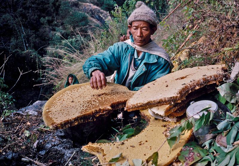 Honey Hunters of Nepal.  Chimro cliff, Siklis village. Western Nepal.