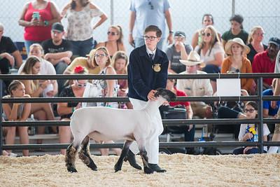 2018 OC Fair SHEEP Showmanship