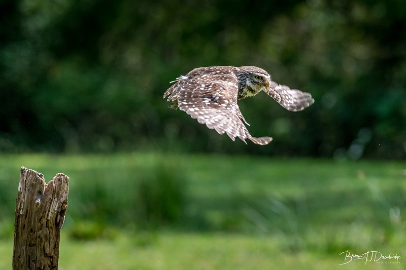 The Little Owl Shoot-6770.jpg