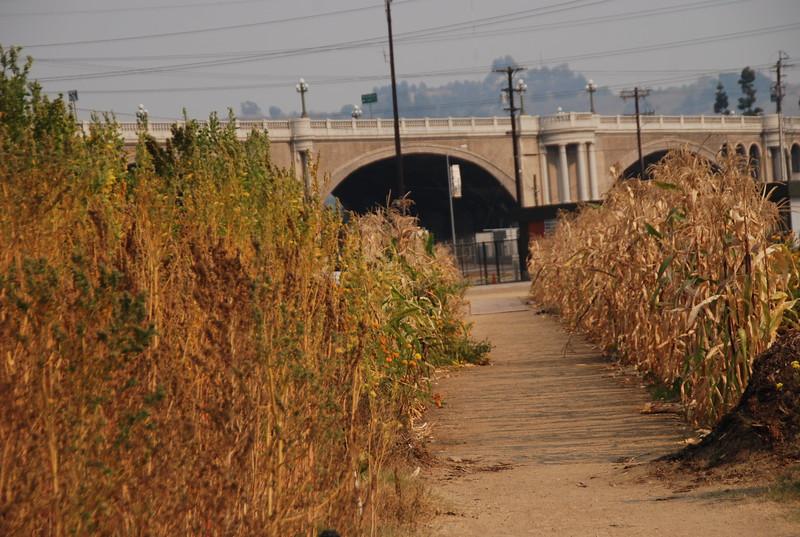 2008-11, Pathway and Bridge