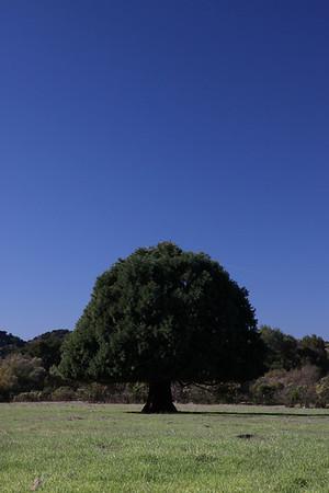 Tree 02 2011