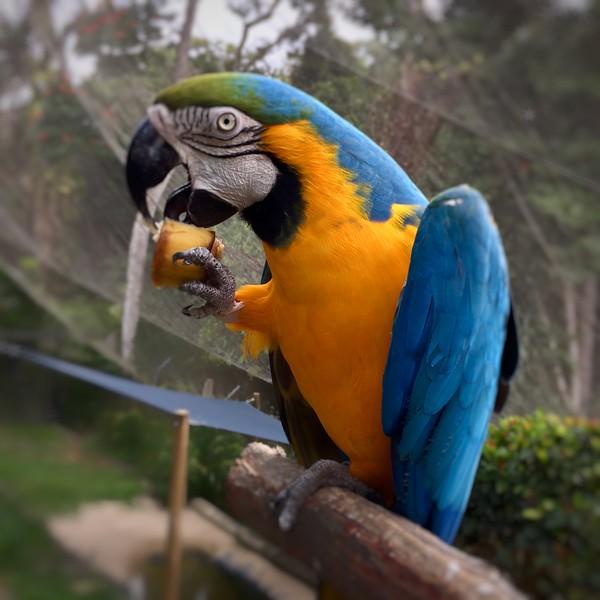 Blue&Gold Macaw.jpeg