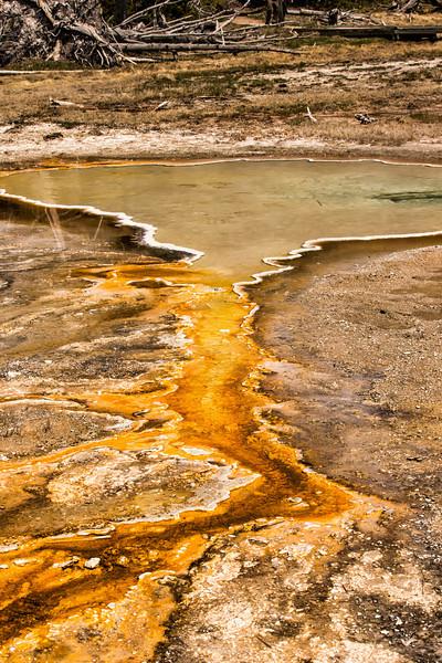 Yellowstone_may_2014_FH0T1149.jpg