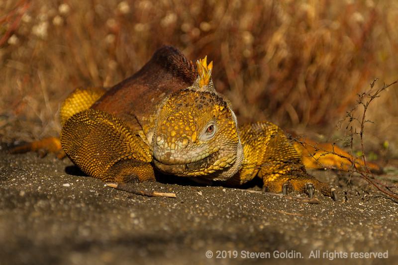 Galapagos 0719 SJGoldin-1024.jpg