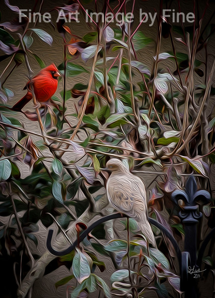 The Cardinal & The Dove