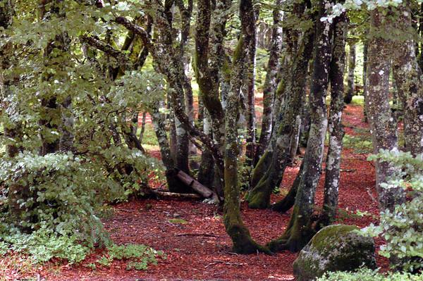 Au pays des arbres
