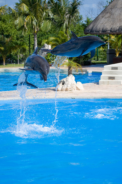 Dolphinaris Cancun 9.jpg