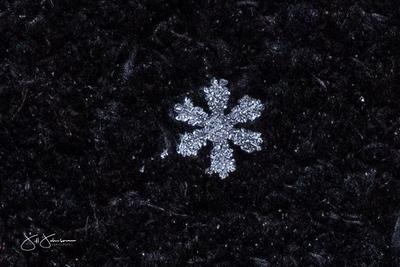 snowflakes-1330.jpg