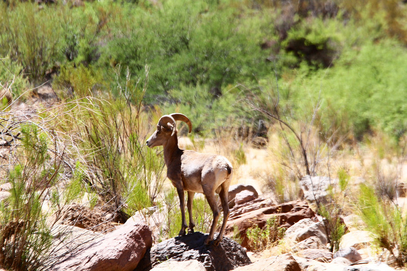 2014_Grand_Canyon_WHDW2_7D 28