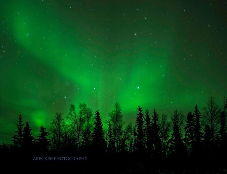 Lighted Forest.jpg