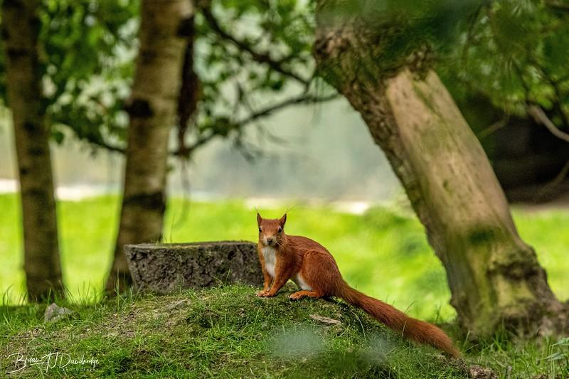 British Wildlife Centre_D850-0007.jpg