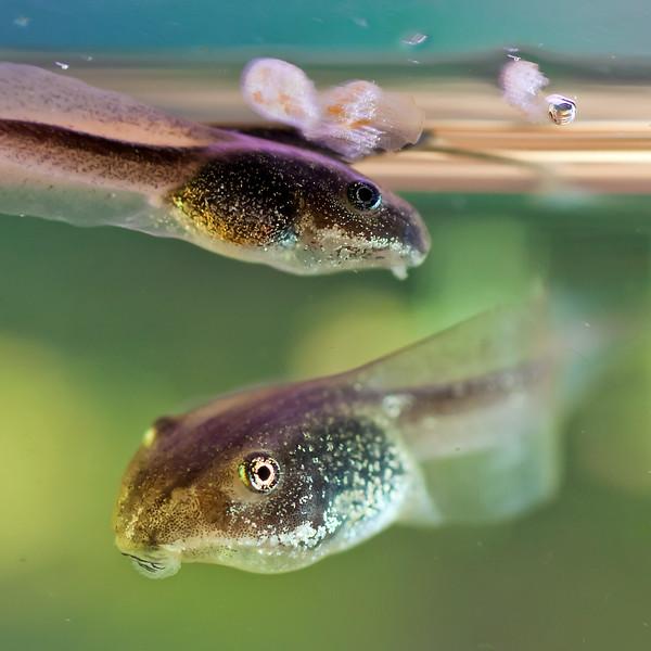 IMG_1300_Frog (1).jpg