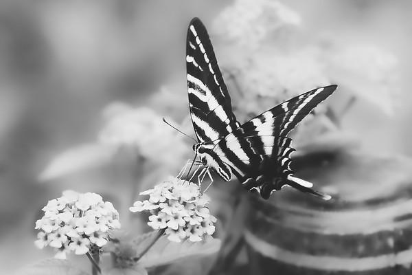 Black & White ~ 2018