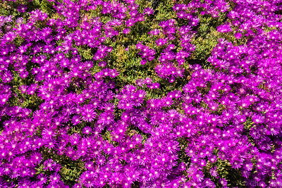 Stanford's Arizona Cactus Garden, March 2015