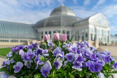 Conservatory Spring