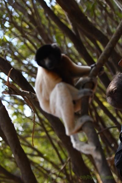 Madagascar 2017 (22)