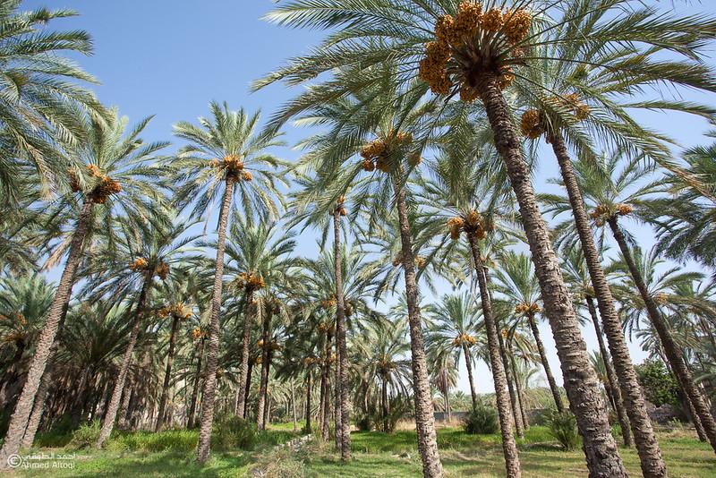 palm tree (11).jpg