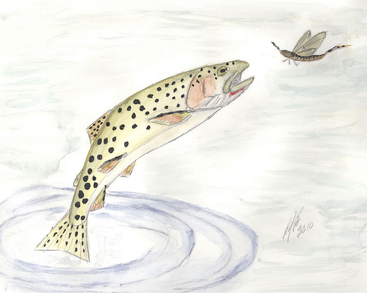 Jumping Trout Wash 6.jpg