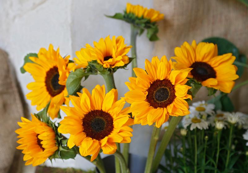 01. Gardener's World_05A8985.jpg
