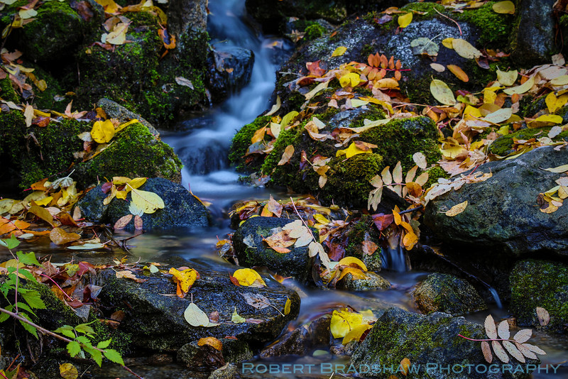Fall colors drift away in a small stream of Little Cottonwood Canyon