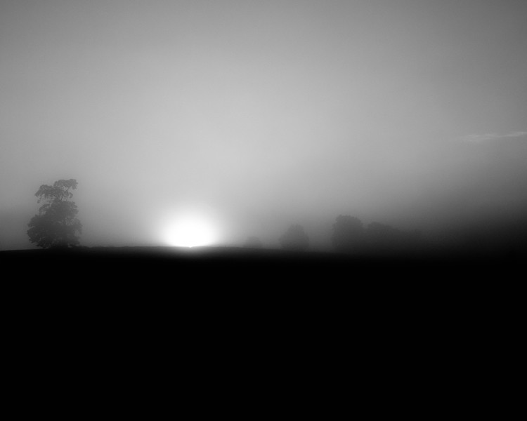 FoggyFarm1620.jpg