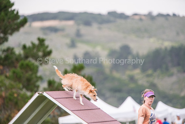 Del Monte KC Agility Trial - June 4th, 2016