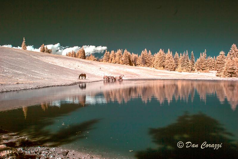 Watering Mustangs 2-2aa.jpg