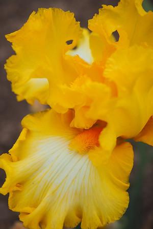 2019-05-24 Iris farm