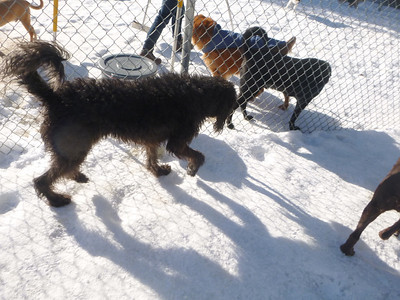 All Dogs Gym 3-7-2014