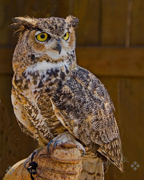 Hootie the Owl - Judith Sparhawk