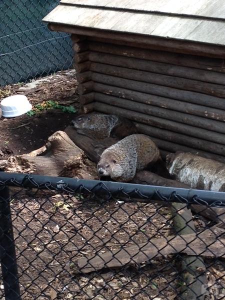 Weissfest 2014 - Staten Island Zoo 3.jpg