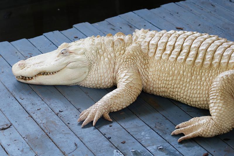 Gatorland24887_ID.jpg