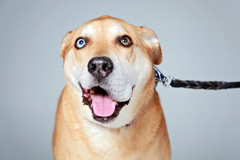 Picture Pawfect - 19 marca 2017 - 228-1.jpg