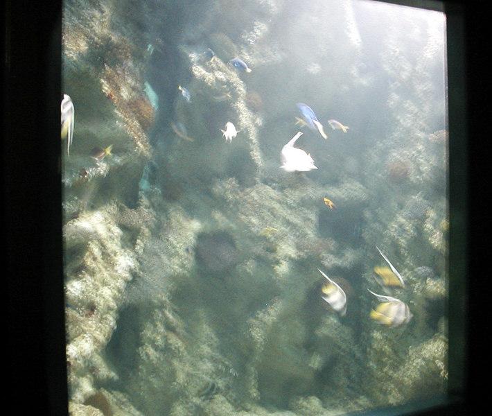 56.  Sydney Aquarium.JPG