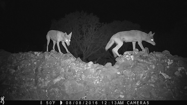 Trail Cam Shots - Night