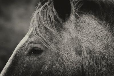 Spirit Collection Featuring Arizona Wild Horses