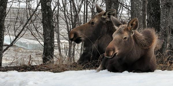2013 - Alaska - 1 - Preamble