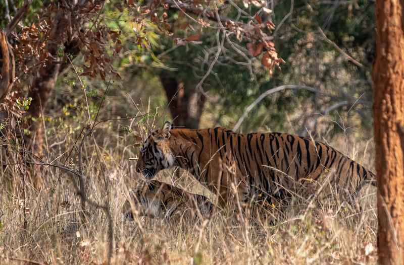 India_April_2019-525.jpg